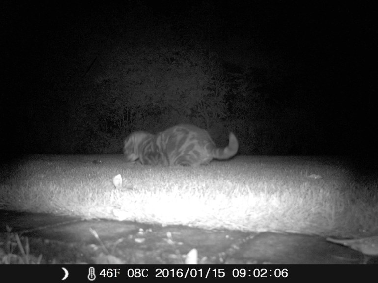 A night vision picture of our cat, Ernie, face to face with a mouse.