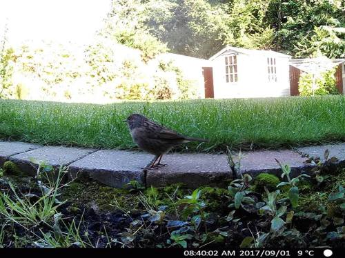 Garden Wildlife Camera captures bird posing for picture