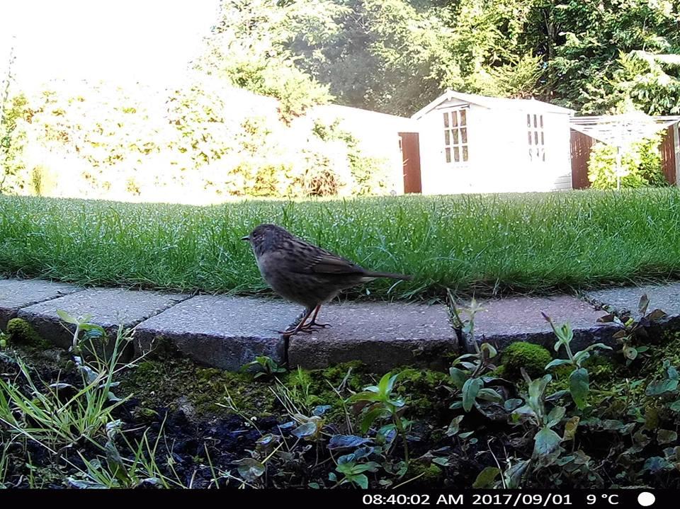 Garden Wildlife Camera captures bird posing for picture